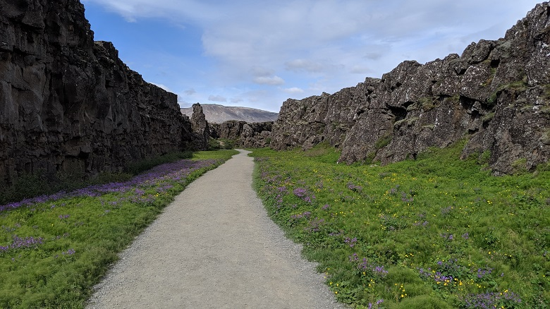 gravel path through canyon surrounded by green grass, purple flowers, and black walls