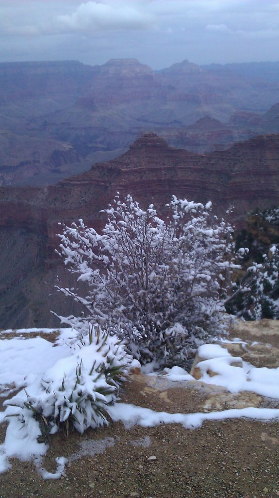 Snow on bush with majestic view